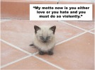 Cats Quote Charlie Sheen