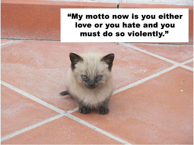 0629cbf3ec Cats Quote Charlie Sheen
