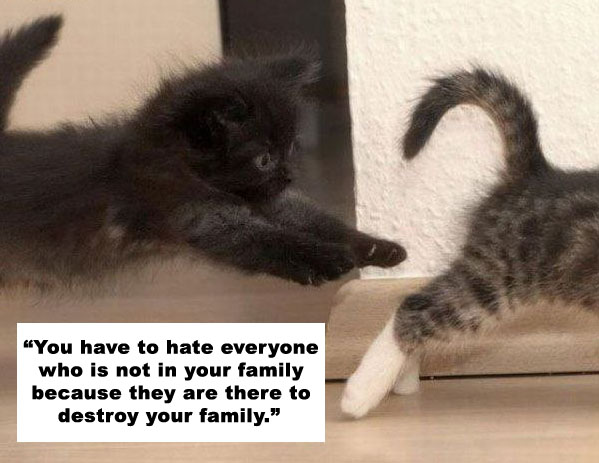 Cats quote Charlie Sheen. | MarkWeinGuitarLessons.com