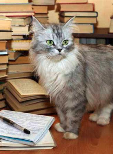 Cats Book List