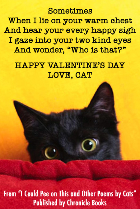 cat valentines day card - Cat Valentines Day
