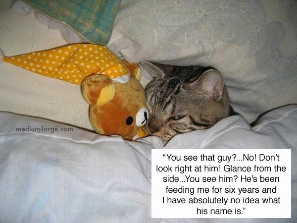 cats-confiding-1