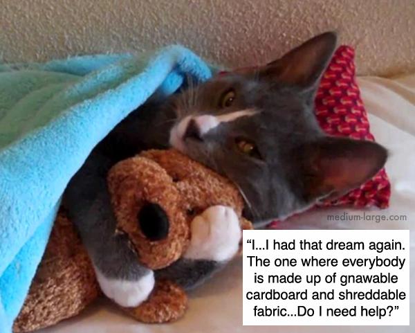 cats-confiding-2