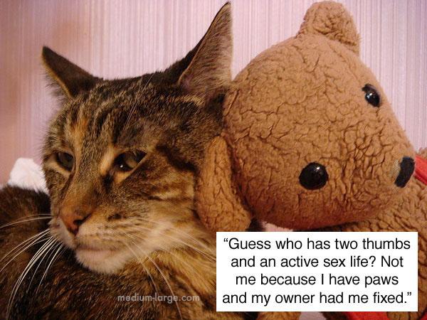 cats-confiding-4