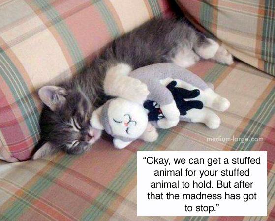 cats-confiding-5