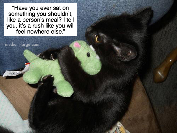 cats-confiding-6