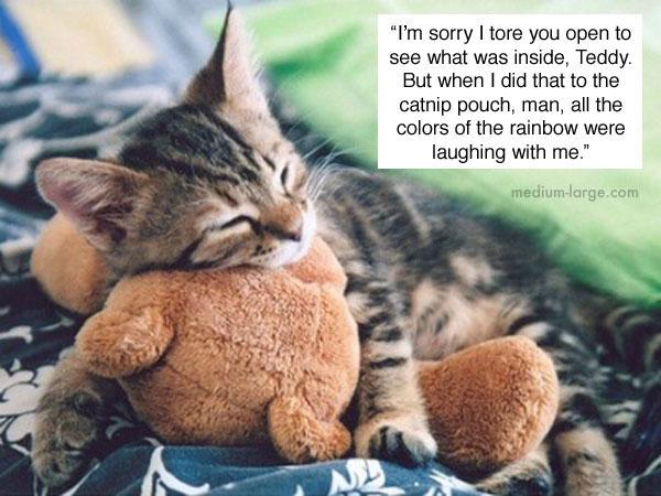 cats-confiding-7