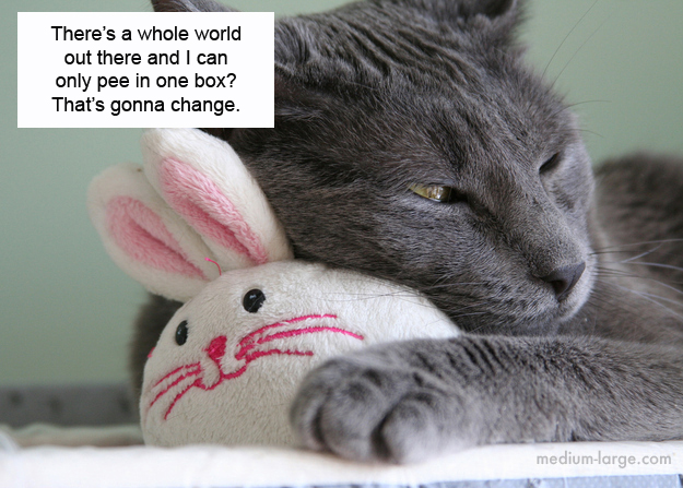 cats-confiding-9