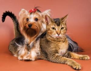 ICCOT Dog Cat