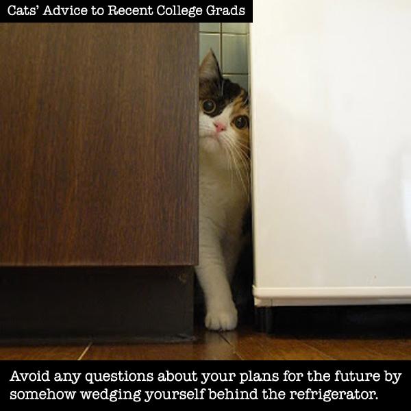 cat-grad-2a