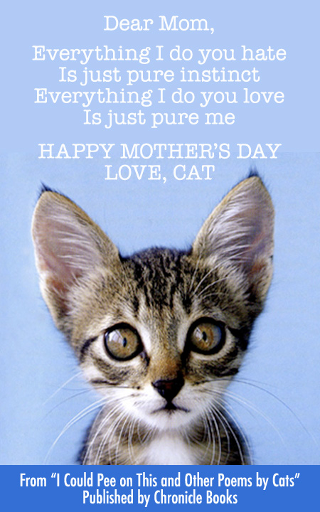 Cat Mother's Day Card