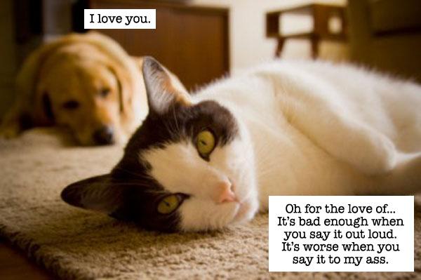 catdog1