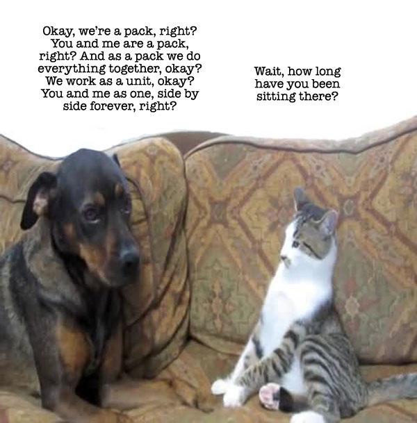 catdog10