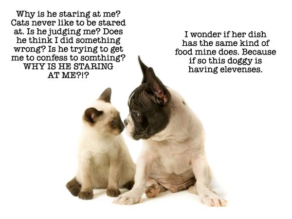 catdog11