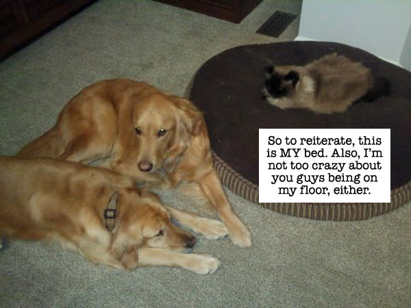 catdog2