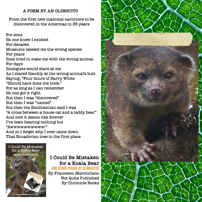 Olinguito Poem Page Small