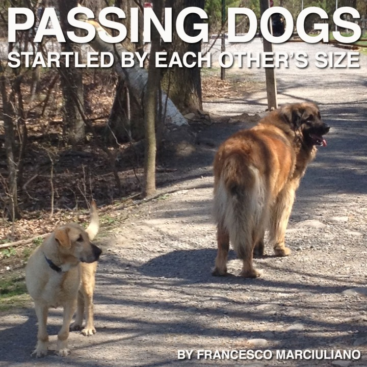 Passing Dogs Coffee Book