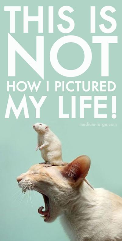 Overwhelmed Cat Life