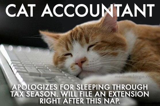 cat accountant cat accountant apologizes medium large