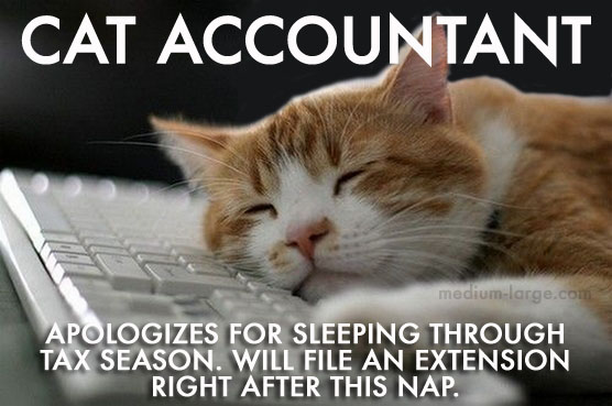 Cat Accountant