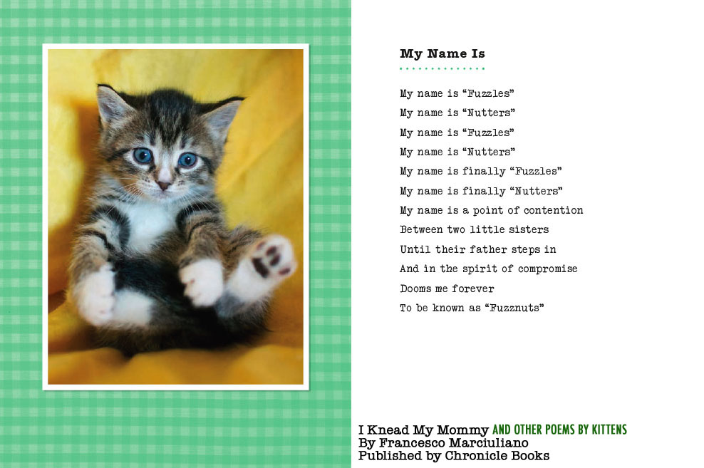 i knead my mommy and other poems by kittens the book