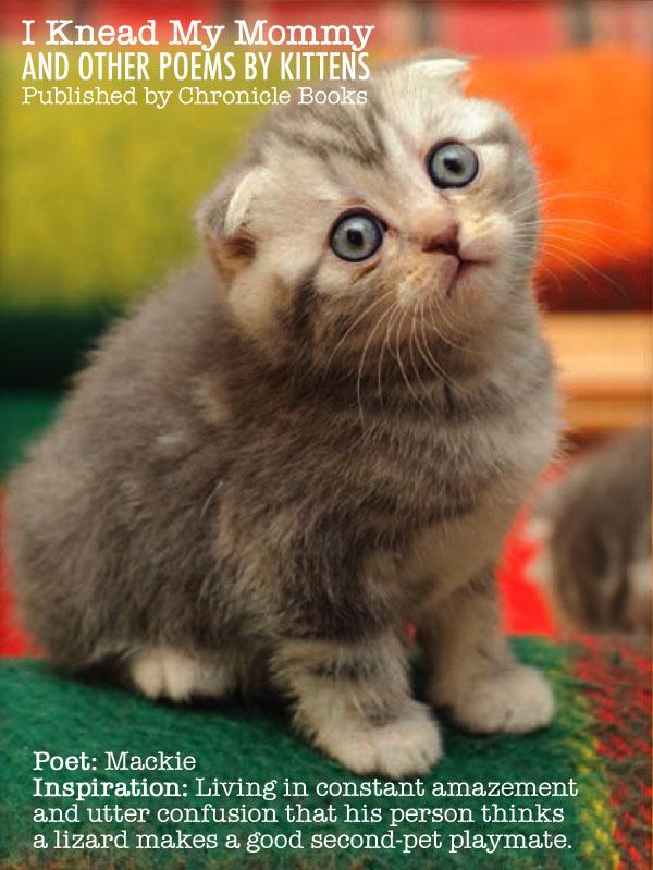IKMM Kitten Bio 3