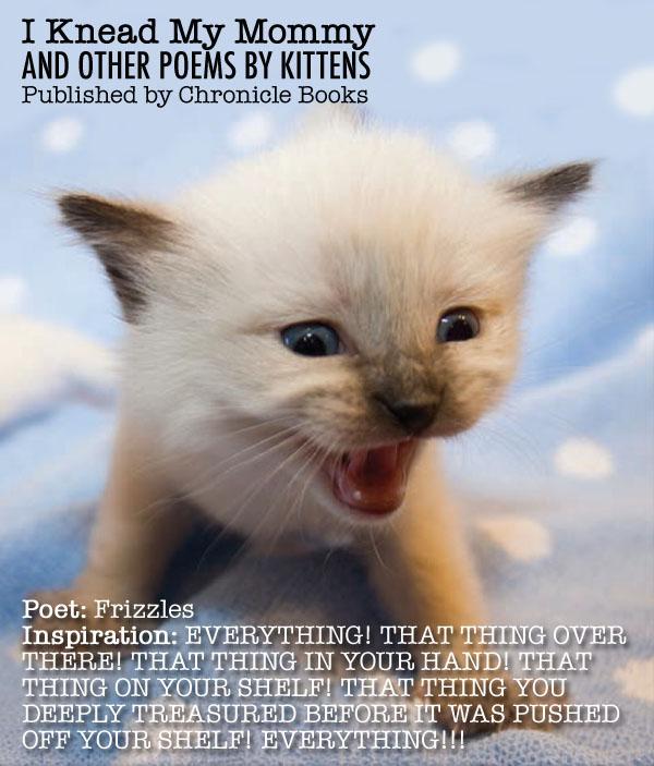 IKMM Kitten Bio 4