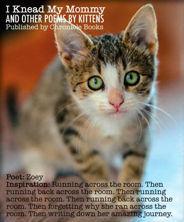 IKMM Kitten Bio 5