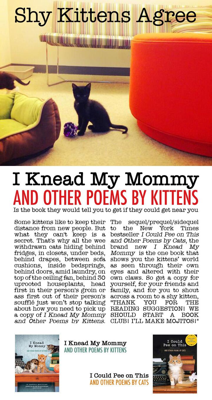 IKMM Shy Kittens Ad
