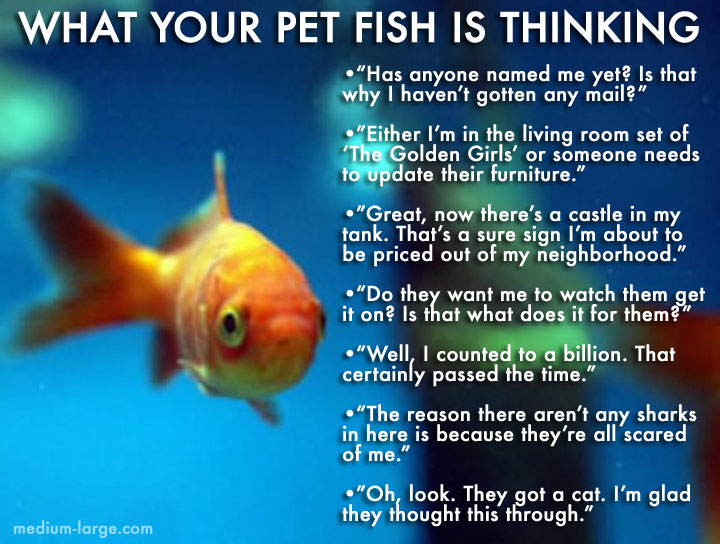 What Your Pet Fish Is Thinking 2