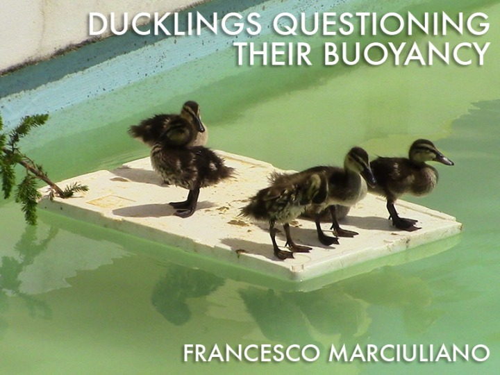 Duckling Coffee Table Book