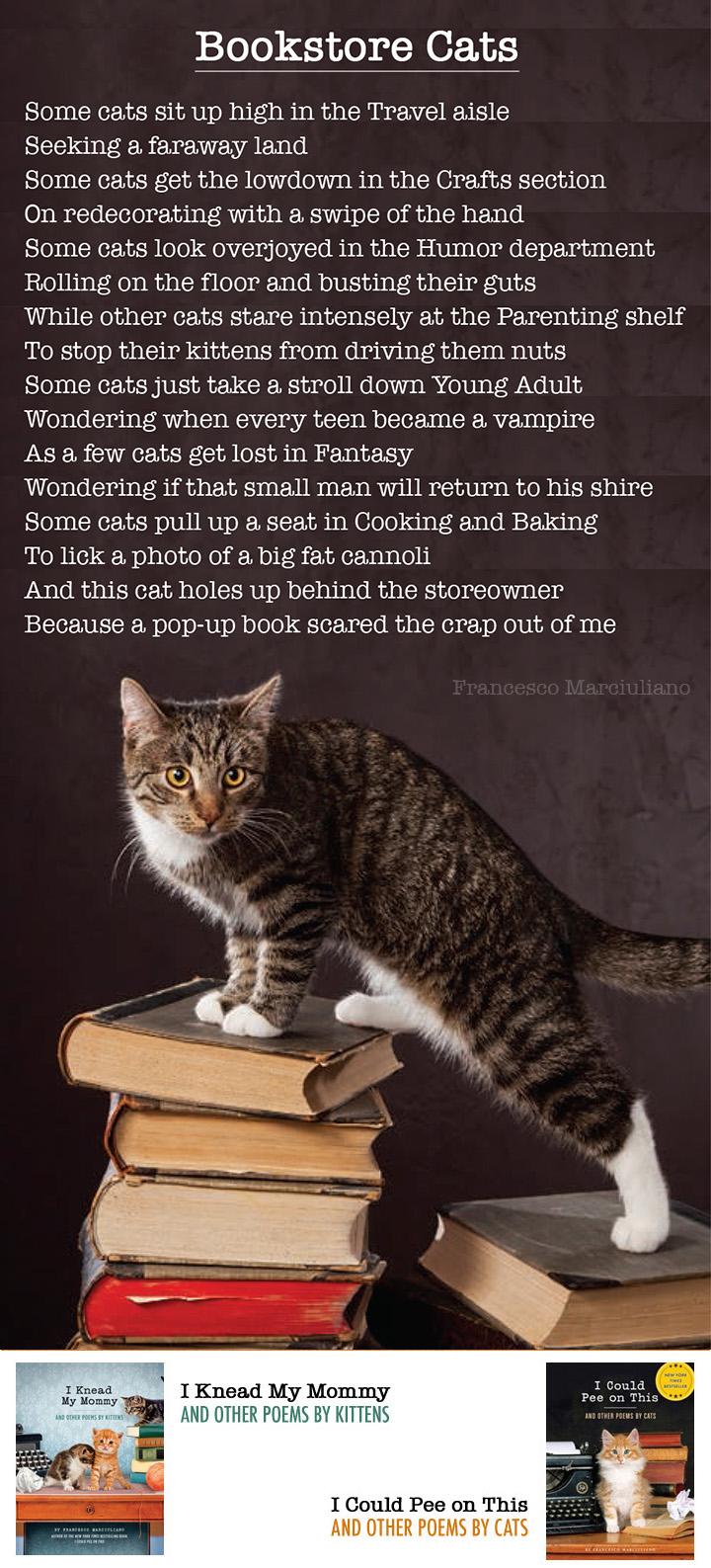 Bookstore Cats Long 720a