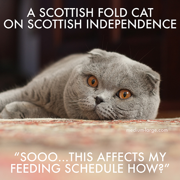 Scottish Fold Independence 2s Small