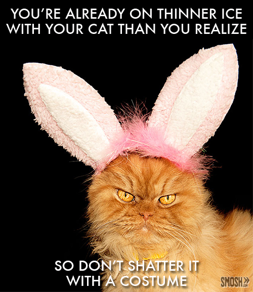 angry-cat-bunny-ears