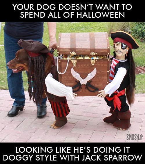 dog-halloween-pirate-costume