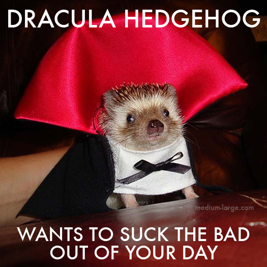 Dracula Hedgehog 2
