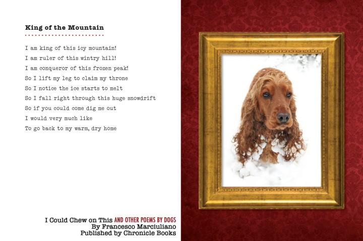 Blizzard Dog Poem