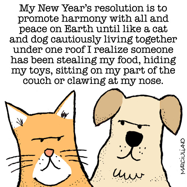 New Years Day 2015 Cat Dog