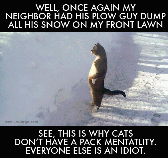 Cat Neighbor Plow ML