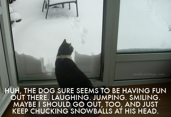 Cat Watching Dog in Snow ML