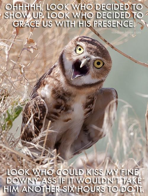 aggravated-owl-2