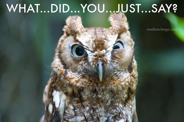 aggravated-owl-3