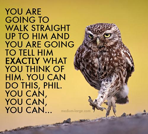 aggravated-owl-4