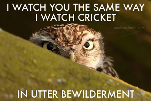 aggravated-owl-5