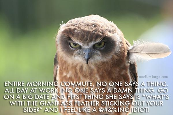 aggravated-owl-6