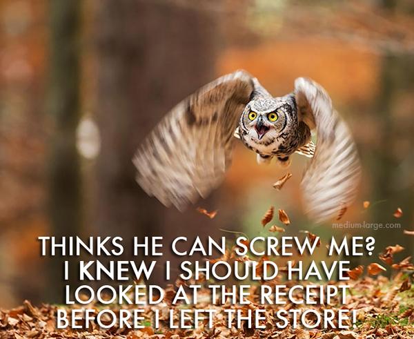 aggravated-owl-7