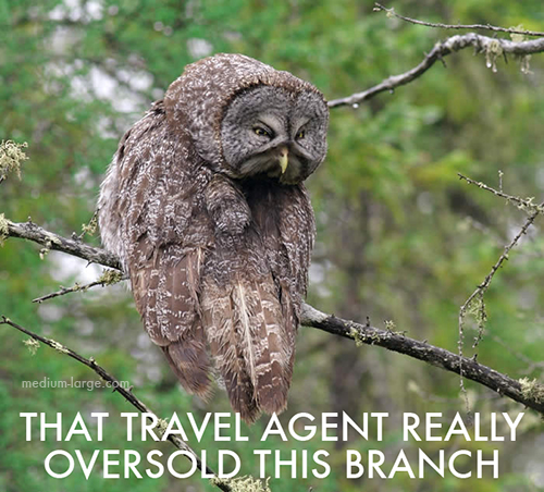 aggravated-owl-8