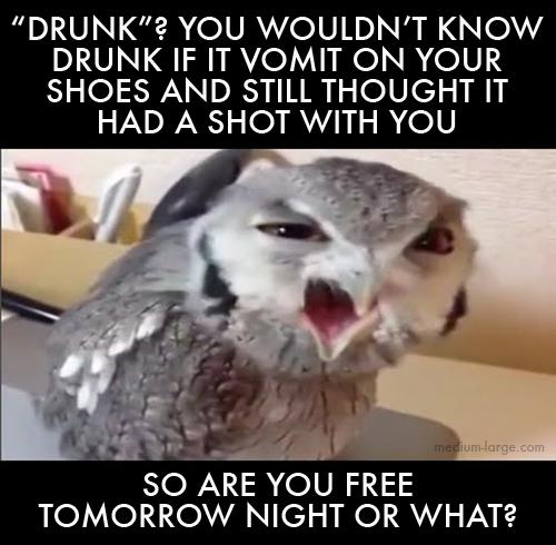 aggravated-owl-9
