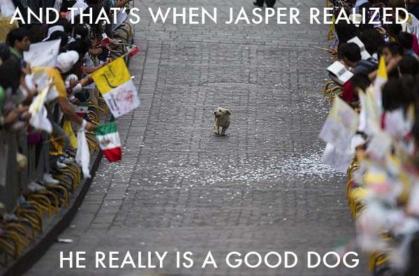 Parade Dog