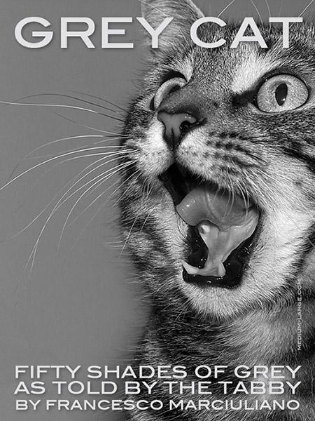 Grey Cat Book ML 3